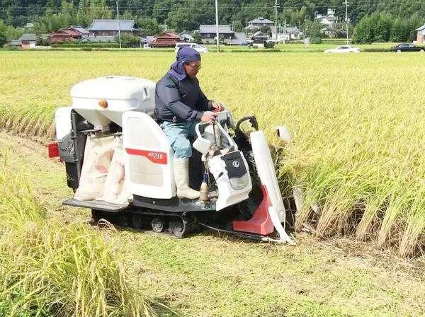 水稻收割机械